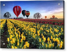Acrylic Print featuring the photograph Hot Air Balloons Over Tulip Fields by William Lee