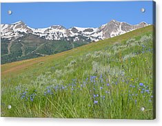 Hot And Cold Acrylic Print by Amanda Powell