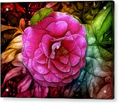 Hot And Silky Pink Rose Acrylic Print