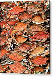 Hot Crabs Acrylic Print by Sky Noir Photography By Bill Dickinson