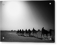 hot desert sun beating down on camel train in the sahara desert at Douz Tunisia Acrylic Print by Joe Fox