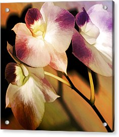 Acrylic Print featuring the photograph Hot Orchid Nights by Holly Kempe