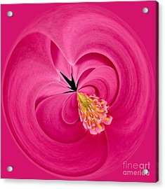 Hot Pink And Round Acrylic Print by Anne Gilbert