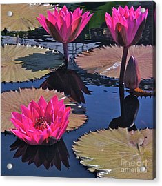 Hot Pink Tropicals Acrylic Print