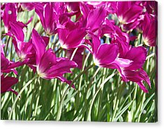 Acrylic Print featuring the photograph Hot Pink Tulips 2 by Allen Beatty