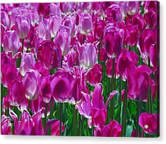 Hot Pink Tulips 3 Acrylic Print by Allen Beatty
