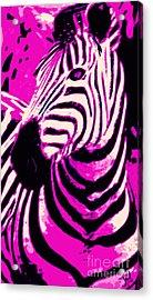 Hot Pink Zebra  Acrylic Print by Mindy Bench