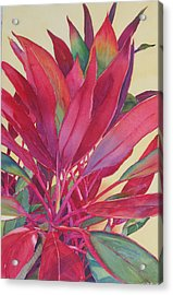 Hot Ti Acrylic Print by Judy Mercer