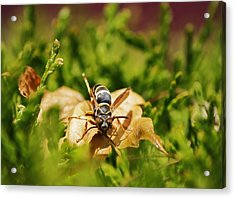 Acrylic Print featuring the photograph Hot Wasp... by Al Fritz