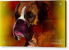 House Broken Boxer Painting Acrylic Print by Marvin Blaine