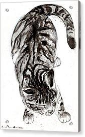 House Cat Acrylic Print by Kurt Tessmann