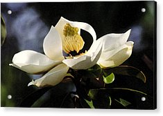 Houston Magnolia Acrylic Print