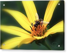 Acrylic Print featuring the photograph Hover Fly On Flower by Ludwig Keck