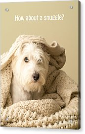 How About A Snuggle Card Acrylic Print by Edward Fielding