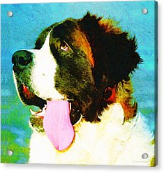 How Bout A Kiss - St Bernard Art By Sharon Cummings Acrylic Print