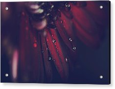 How Deep Is Your Love Acrylic Print by Laurie Search