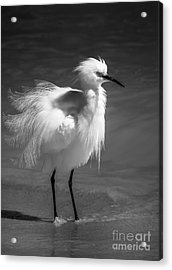 How Do I Look- Bw Acrylic Print