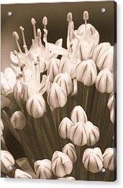 How Gumdrops Grow Acrylic Print by Tg Devore