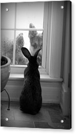 How Much Is The Doggie In The Window? Acrylic Print