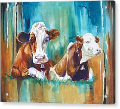 How Now Brown Cow Acrylic Print by P Maure Bausch