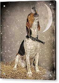 Howl At The Moon Acrylic Print