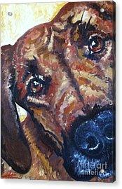 Howler Two Acrylic Print