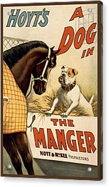 Hoyts A Dog In The Manger Acrylic Print