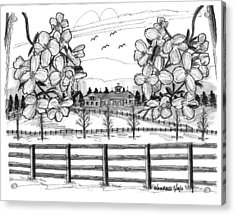 Acrylic Print featuring the drawing Hudson Valley Apple Blossoms by Richard Wambach