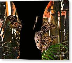 Huge Butterflies In Mindo Acrylic Print by Al Bourassa