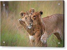 Hugs Acrylic Print