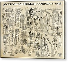 Human Anatomy 1728 Acrylic Print by Daniel Hagerman
