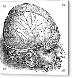 Human Brain Vesalius 16th Century Acrylic Print