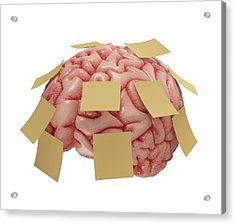 Human Brain With Sticky Notes Acrylic Print by Ktsdesign