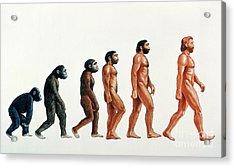 Human Evolution Acrylic Print by David Gifford