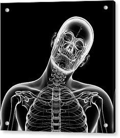 Human Head Bending Sideways Acrylic Print