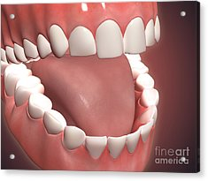 Human Mouth Open, Showing Teeth, Gums Acrylic Print by Stocktrek Images