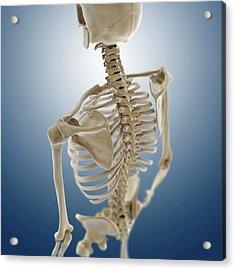 Human Skeleton Acrylic Print