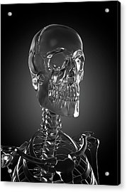 Human Skull Rendered In Glass Acrylic Print by Sebastian Kaulitzki/science Photo Library