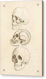 Human Skulls Acrylic Print by King's College London