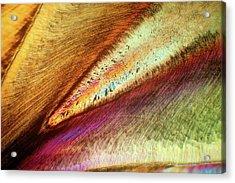 Human Tooth Acrylic Print by Steve Lowry