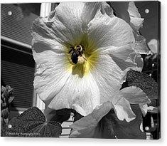 Acrylic Print featuring the photograph Humble Bumblebee by Deborah Fay