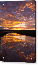 Humbled Acrylic Print by Benjamin Williamson