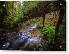 Humbug Creek Acrylic Print by Everet Regal