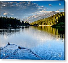 Hume Lake Evening Acrylic Print by Terry Garvin