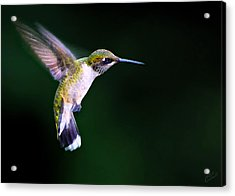 Hummer Ballet 2 Acrylic Print by ABeautifulSky Photography