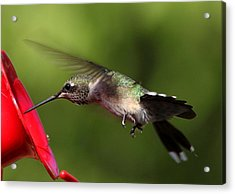 Look Hummingbird Eyelashes Acrylic Print