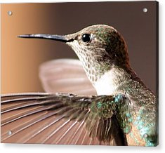 Hummer On The Wing Acrylic Print