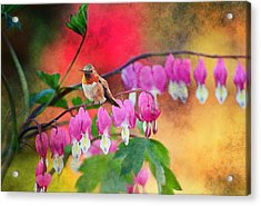 Hummer With Heart Acrylic Print by Lynn Bauer