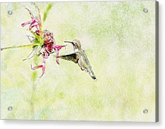 Humming Bird And Flower Acrylic Print by David Stasiak
