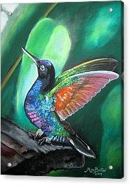 Humming Bird Acrylic Print